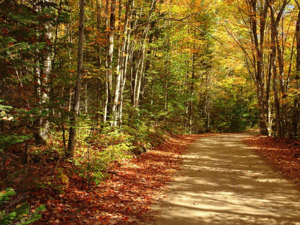 autumnforestparknyc